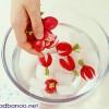 تربچه گل رز